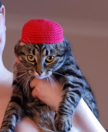Crochet-cap-of-shame-BLOG