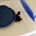 Turtle0405